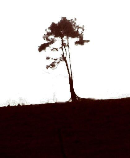 Faux dessin à l'encre de l'arbre