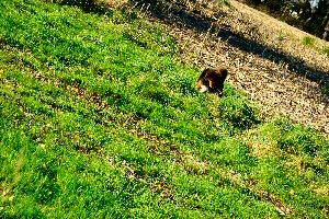 photo d'un chien dans la campagne
