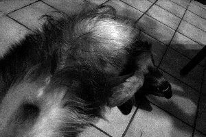 photo d'un chien sur le dos