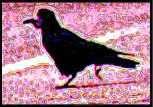 Dessin numérique d'un corbeau freux.
