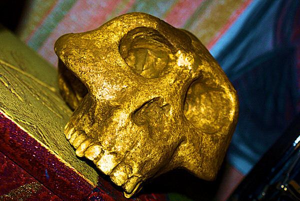 Photo d'un crâne presque humain - Lucy