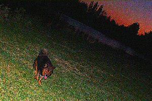 photo d'un chien au crépuscule