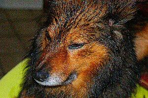 photo d'un chien mouillé