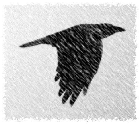 Dessin numérique du vol du corbeau - l'hiver