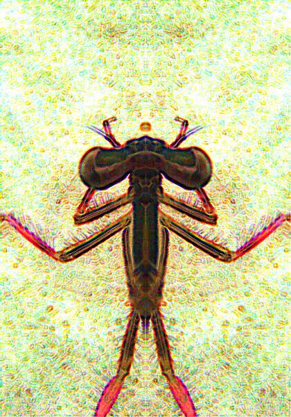 Dessin numérique d'une libellule