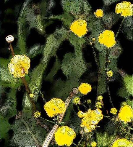Image numérique de boutons d'or - Des fleurs