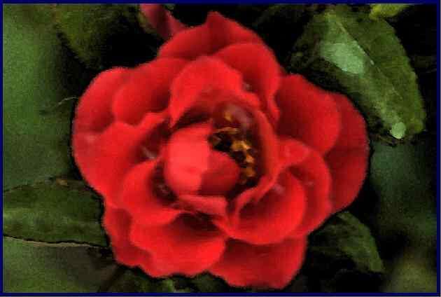 Un dessin numérique d'une rose rouge