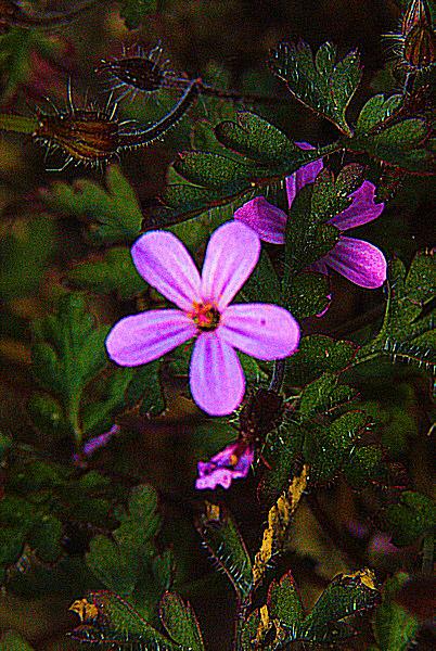 Photo d'une petite fleur mauve.