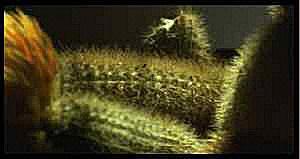 photo d'un cactus affublé d'une fleur articielle