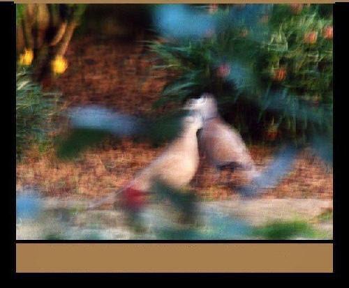 Image numérique sur la fable des deux pigeons - Illustration