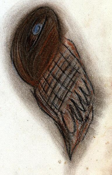 Le dessin d'un oiseau sous camisole de force