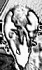Petite image numérique d'un rat