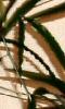 Petite image abstraite - du vert et du jaune cassé