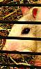 Avatar de la t&ecircte d'un rat vue de profil