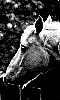 petite photo en clair obscure d'un cheval