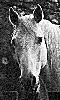 Petit portrait d'un cheval