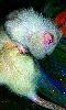 Petite photo artistique d'un rat