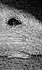 Petite photo du sourire d'un rat