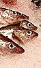 Avatar des t&ecirctes de poissons.