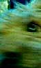Petite photo abstraite d'un chien surpris.